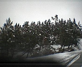 Árvores ao pé dos Parrozelos vistas de este para oeste no Domingo, 30 de Novembro de 2008