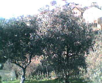 Oliveiras no Sábado, 1 de Janeiro de 2005