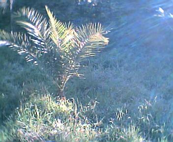 Palmeira no Sábado, 1 de Janeiro de 2005